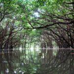 沖縄お大浦湾マングローブの森の中の幻想的な写真